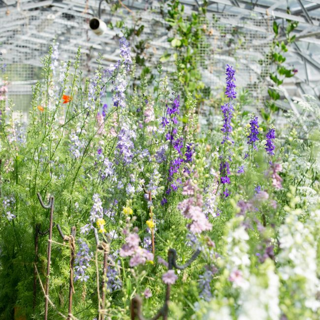 An Introduction to Flower Growing